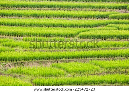 rice terraces in chiangmai province Thailand - stock photo