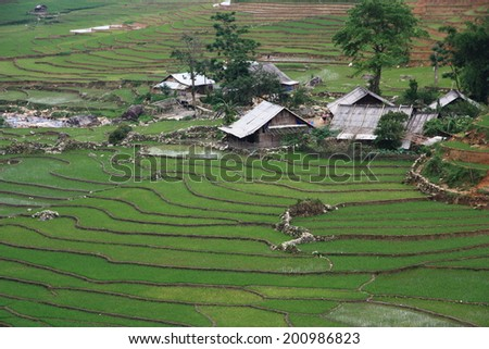 Rice Terraces in Sapa, Vietnam - stock photo