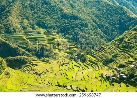 Rice terraces in the Philippines. The village is in a valley among the rice terraces. Rice cultivation in the North of the Philippines, Batad, Banaue. - stock photo