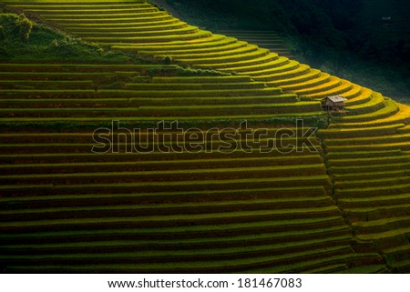 Rice terraces on the mountain. - stock photo