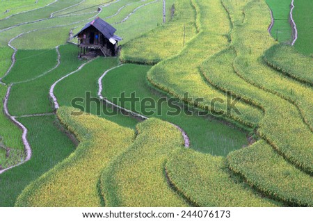 Rice Terraces, South East Asia - stock photo