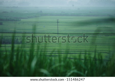 Ricefield in China - stock photo