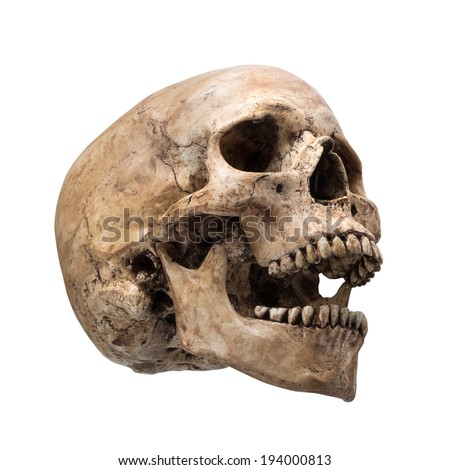 Right side view of human skull open mouth on isolated white background - stock photo