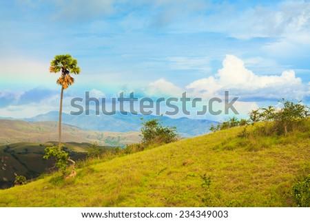 Rinca island. Rainbow over savanna - stock photo