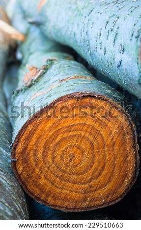 rings of chopped tree trunks  - stock photo