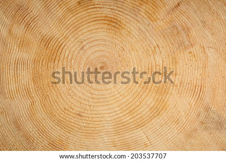 Rings on wooden log - stock photo