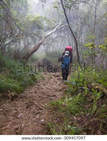 RINJANI MOUNTAIN, LOMBOK, INDONESIA-JUNE 10,2015: Unidentified mountain climber with trekking pole walks slowly on trekking path on the way to Rinjani Mountain in Lombok, Indonesia. - stock photo