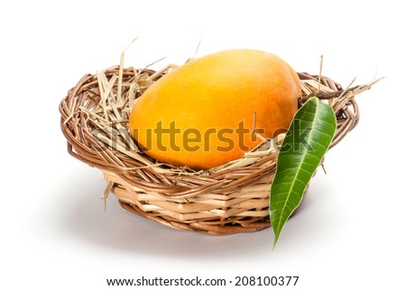 Ripe Alphonso Mangos - King of fruits - stock photo