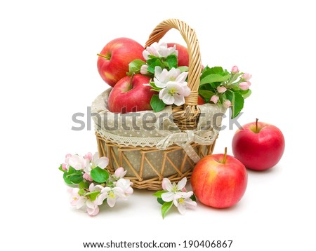 ripe apples and apple flowers isolated on white background close-up. horizontal photo. - stock photo
