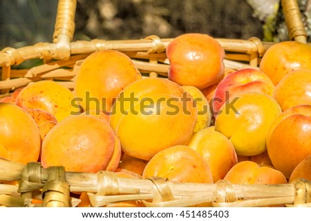 Ripe apricot  in a wicker basket in the garden on a sunny summer day, close up. Selective focus - stock photo