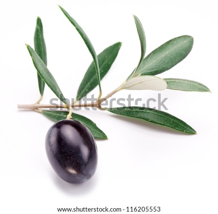 Ripe black olive with leaves on a white background. - stock photo