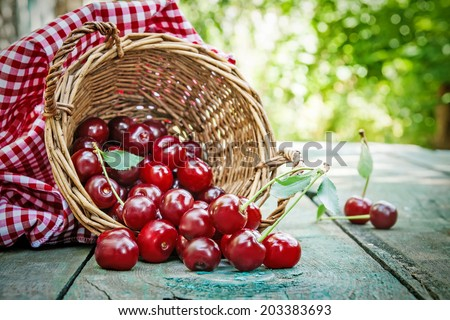 Ripe cherries in basket on old wooden table on countryside against summer foliage in sunlight - stock photo