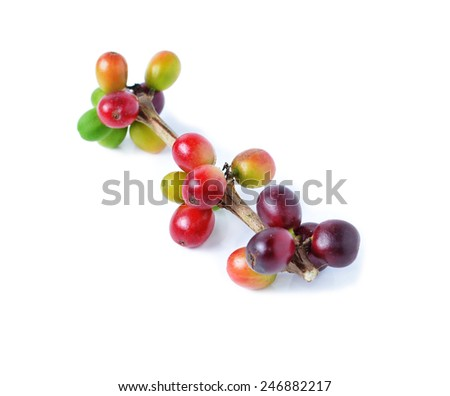 ripe coffee beans on white background - stock photo