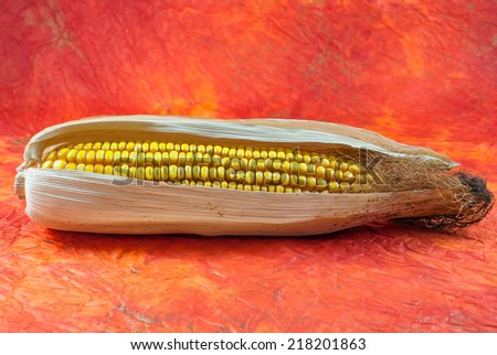 Ripe corn cob isolated on yellow and orange background. Autumn concept - stock photo