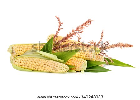 Ripe corn in cobs with flowers and leaves on white background - stock photo
