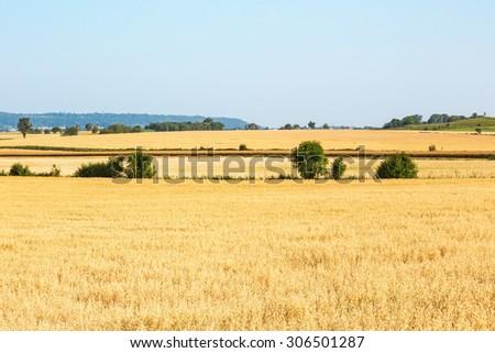 Ripe cornfield in rural view - stock photo
