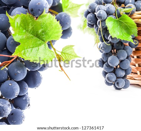Ripe dark grapes with leaves, on white background - stock photo
