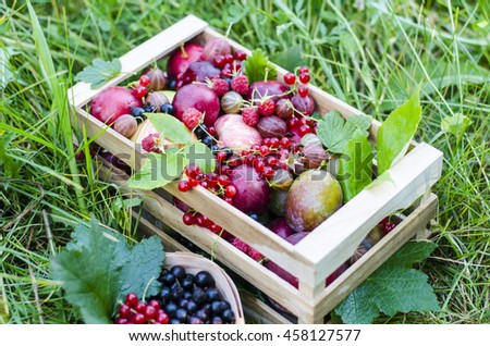 Ripe fruit and berries in a wooden box on a background of green grass. Currant, gooseberries, plums, apples, figs, blackberry, pear, peach, raspberry, black currant. - stock photo