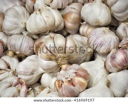 Ripe garlic for sale - stock photo