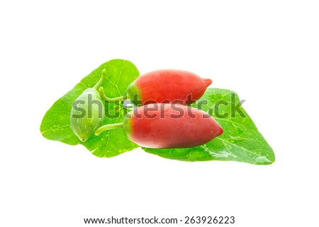 Ripe ivy gourd fruits. - stock photo