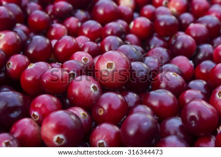 Ripe juicy cranberries, bright autumn colorful background - stock photo