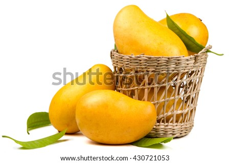 Ripe mangoes fruit in basket with leaves isolated white background - stock photo
