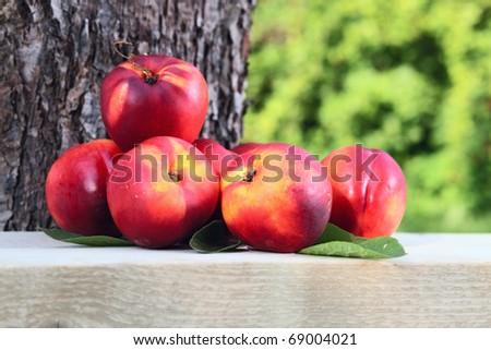 ripe nectarines before a tree - stock photo