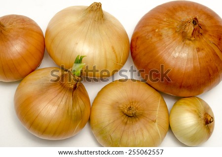 Ripe onions on a white background - stock photo