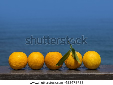 Ripe oranges on sea view background - stock photo