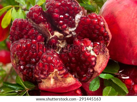 Ripe pomegranate fruit on tree branch - stock photo