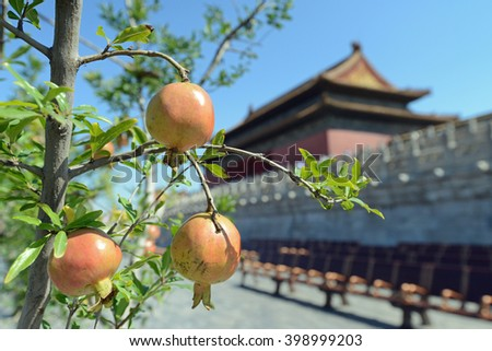 Ripe pomegranate fruits at the Palace Museum (Forbidden City) in Beijing, China - stock photo