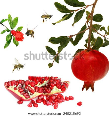 Ripe pomegranate fruits, pomegranate flower and honey bees. Isolated on white background  - stock photo