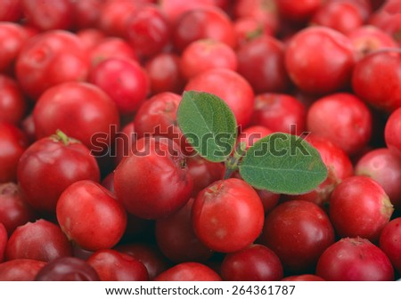 ripe red cranberries as background - stock photo