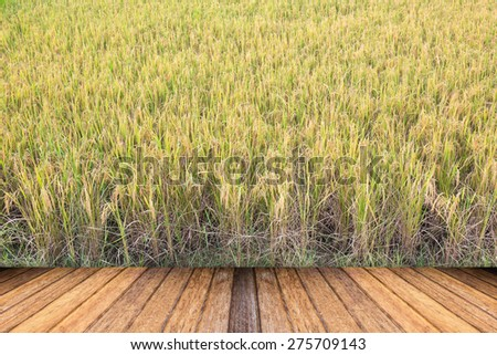 Ripe rice farm ready to harvest with wooden floor - stock photo