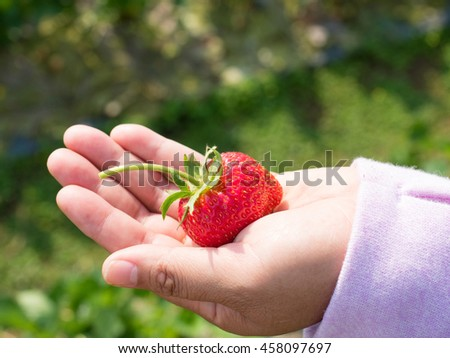 ripe strawberry on woman's hand in outdoor field - stock photo