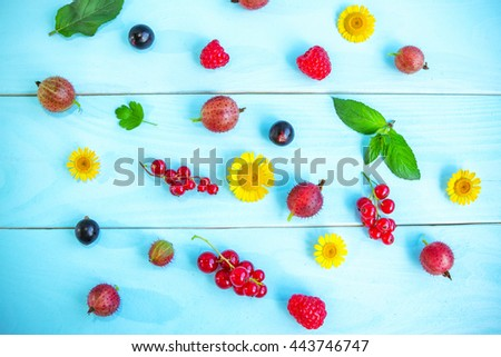 Ripe summer berries and flowers, black and red currant, gooseberry, raspberry,  green peppermint leaves and yellow chamomiles on painted blue wooden background - stock photo