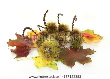 ripe sweet chestnuts against white Hntergrund - stock photo
