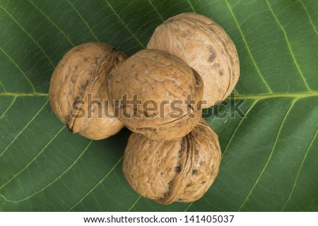 Ripe walnuts on leave. Studio shot - stock photo