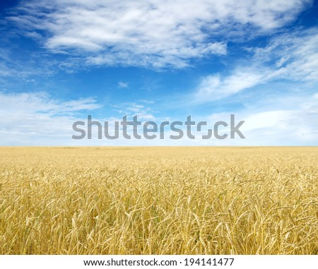 Ripe wheat ears against blue sky with clouds - stock photo