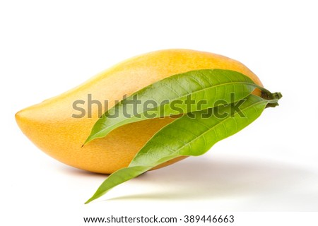 Ripe Yellow Mango fruit and leaf isolated white background - stock photo