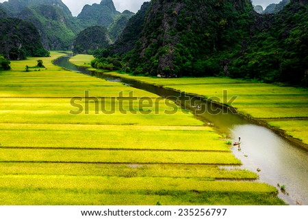 Ripen rice strips on both sides of a stream inside Tam Coc Natural Reserve, Ninh Binh, Vietnam.  This location is famous for tourism for its natural beauty with mountains, streams & paddy fields. - stock photo