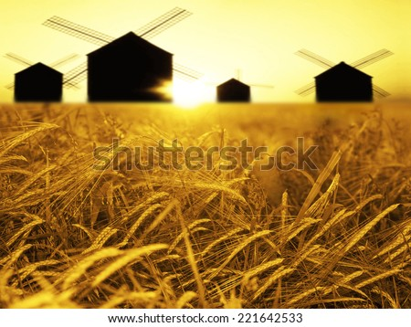 ripening ears of yellow wheat field on sunset sky  old windmills background of  setting sun on horizon Idea of raw materials for food, rich harvest home heavy crop, harvesting, golden sunny spike - stock photo