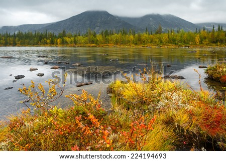 Rischorr mountain covered with clouds is reflected in shallow Polygonal northern taiga forest lake with tussocks and dwarf birch trees on foreground - stock photo