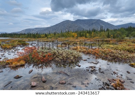 Rischorr mountain reflection in shallow Polygonal northern taiga forest lake with rocks, willow bushes and dwarf birch trees in the foreground - stock photo
