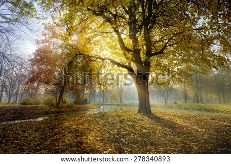 Rising sun making shadows of trees in a park - stock photo