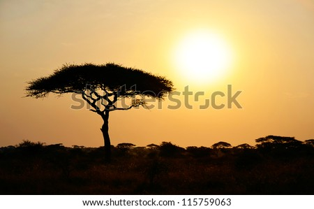Rising Sun shinning with single Acacia tree in Africa. Beautiful scenery of sunrise / sunset in Serengeti National Park - stock photo