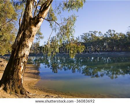River and gum tree Swan Hill Australia - stock photo