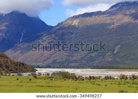 river and mountain landscape with herd of cows grazing in the meadow - stock photo