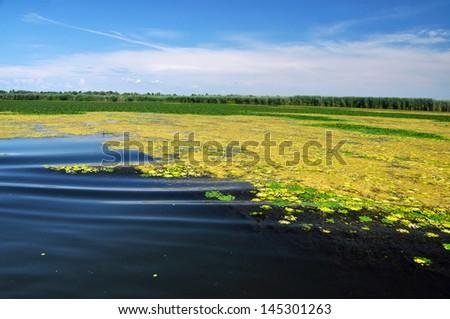 River and swamp vegetation in the Danube Delta - stock photo