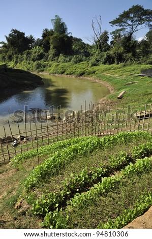River Canal Vegetable Farm Thailand - stock photo